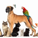 Kern County Animal Shelter reopens on Monday!